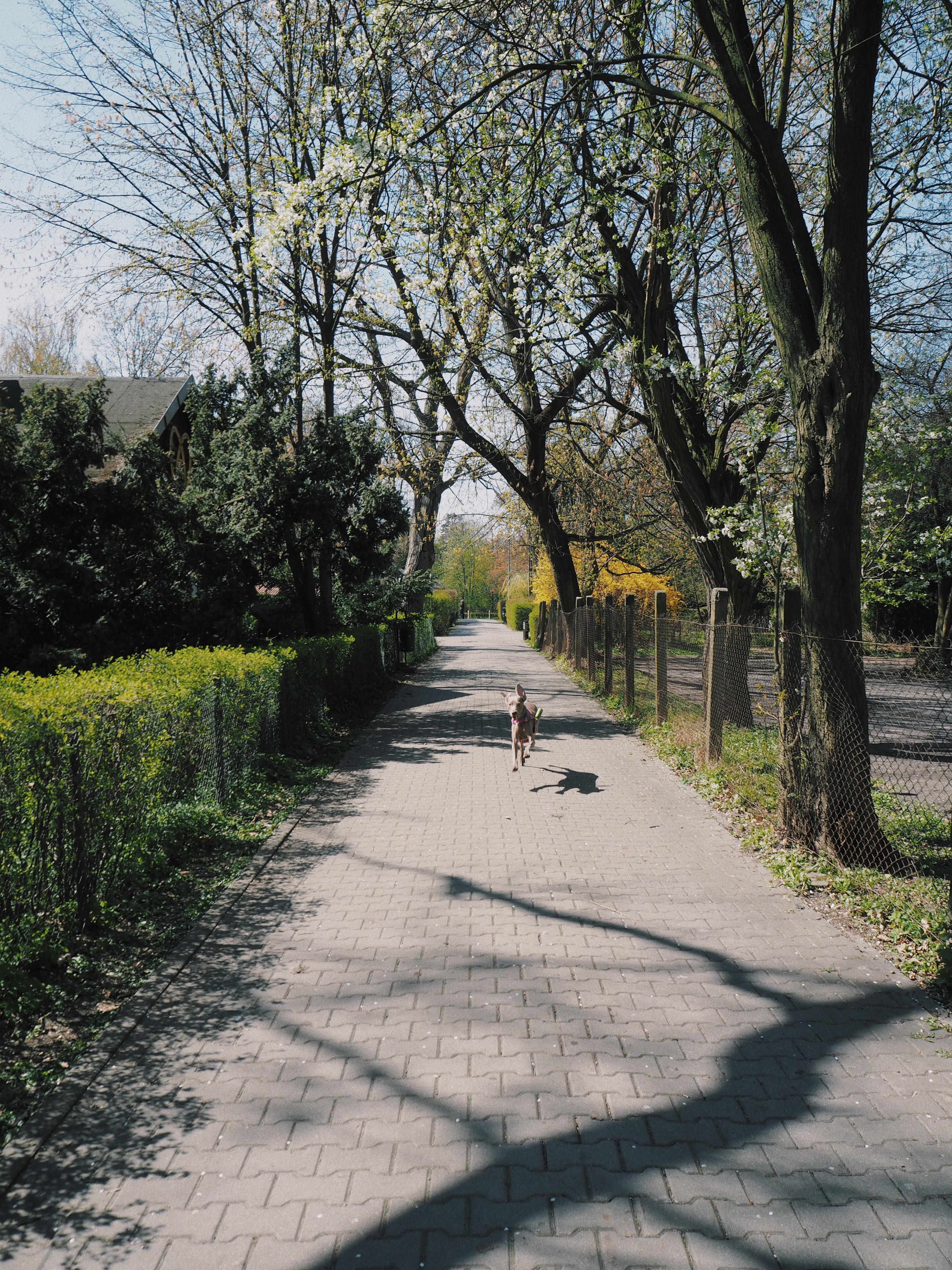 Niektórym wiosna tak bardzo uderzyła do głowy, że czuli się, jakby latali 30 cm ponad chodnikami ;)