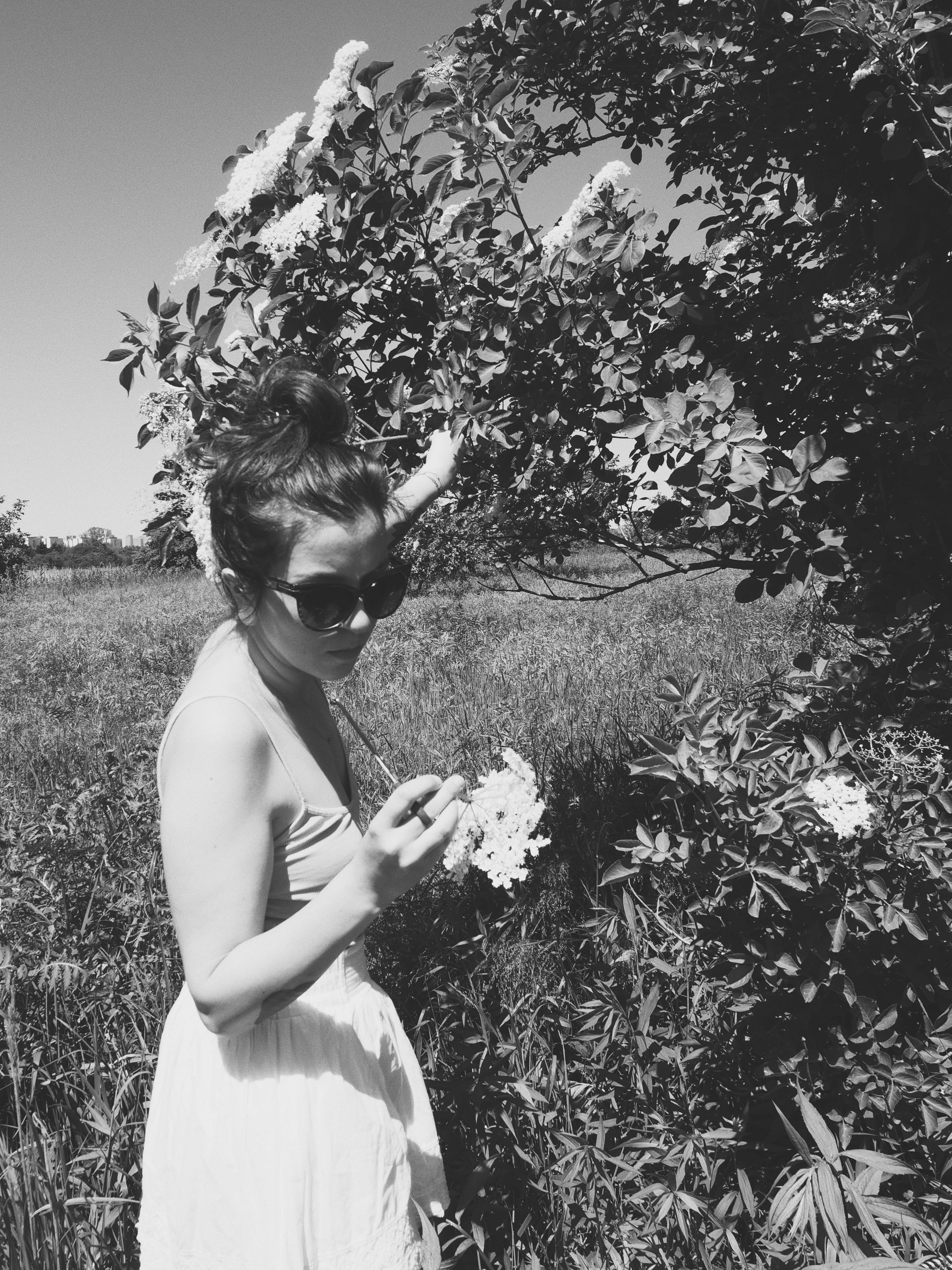 Wybieraj jasne, pełne kwiatostany bez owadów.