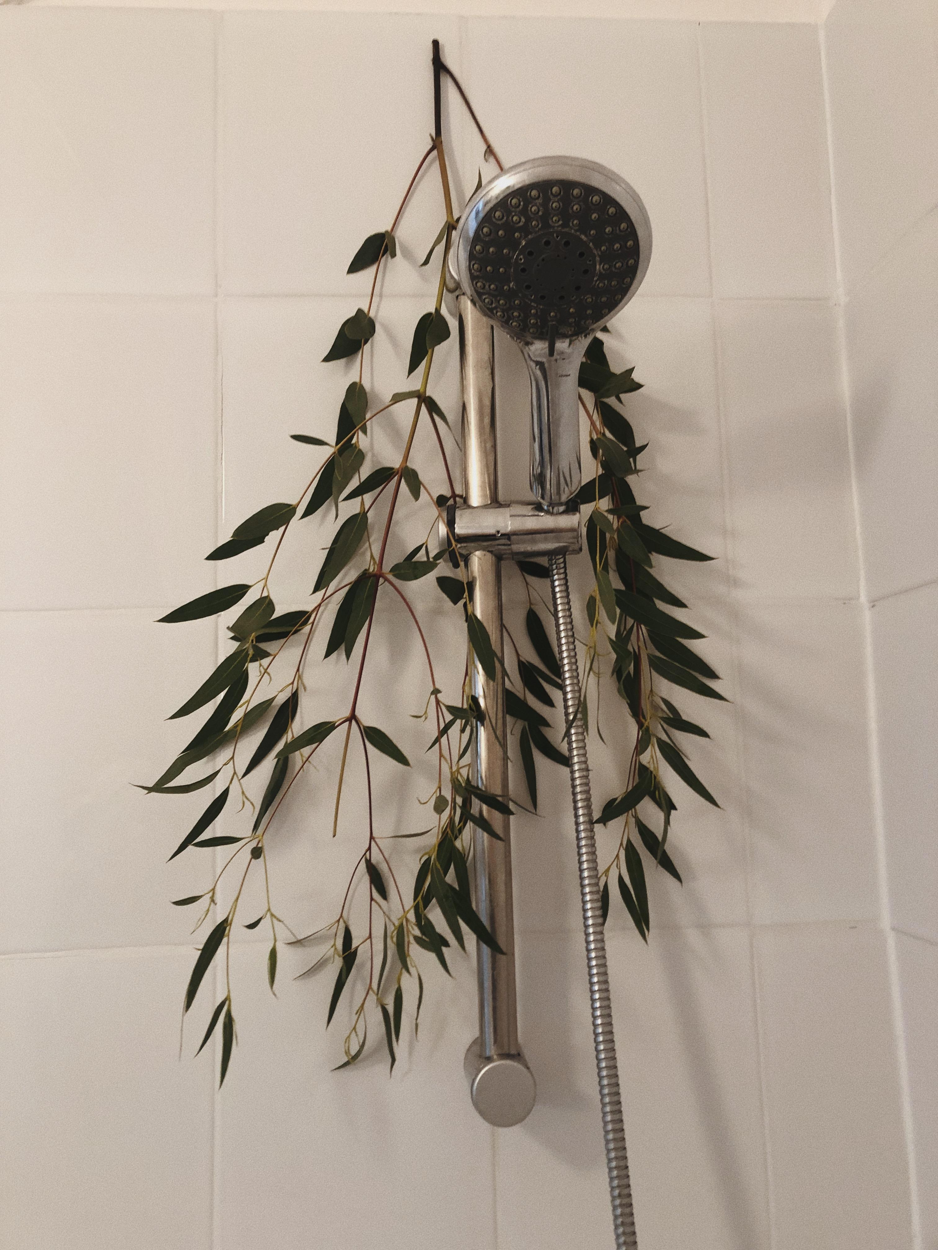 eukaliptus w łazience