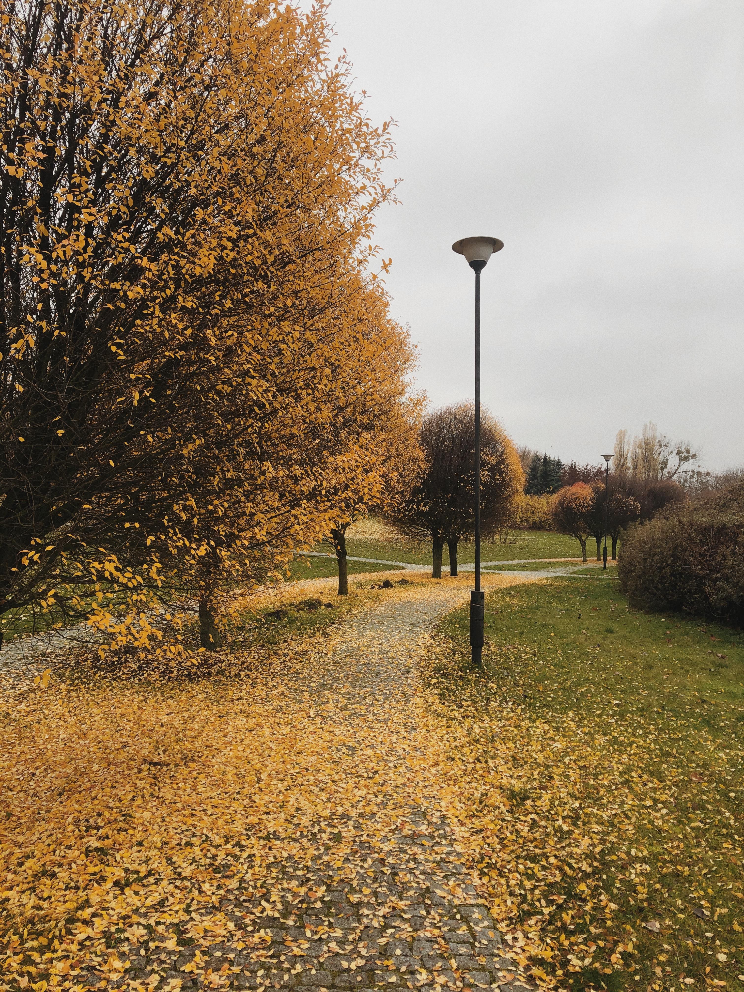 park jesień