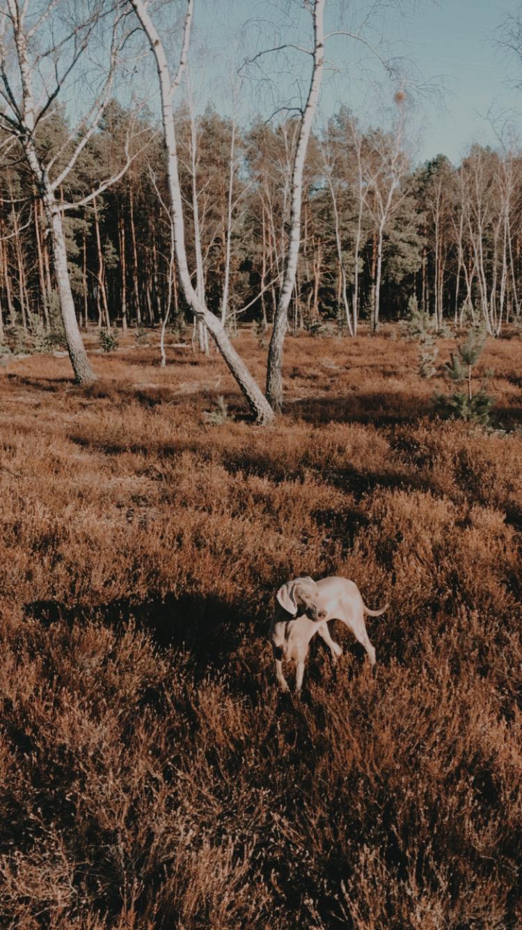 Luna była najszczęśliwsza. Nagle tyle spacerów na odludziach - pośród wrzosowisk, łąk i drzew. Nie wiedziała jeszcze, że w kwietniu lasy pozostaną tęsknotą serca.