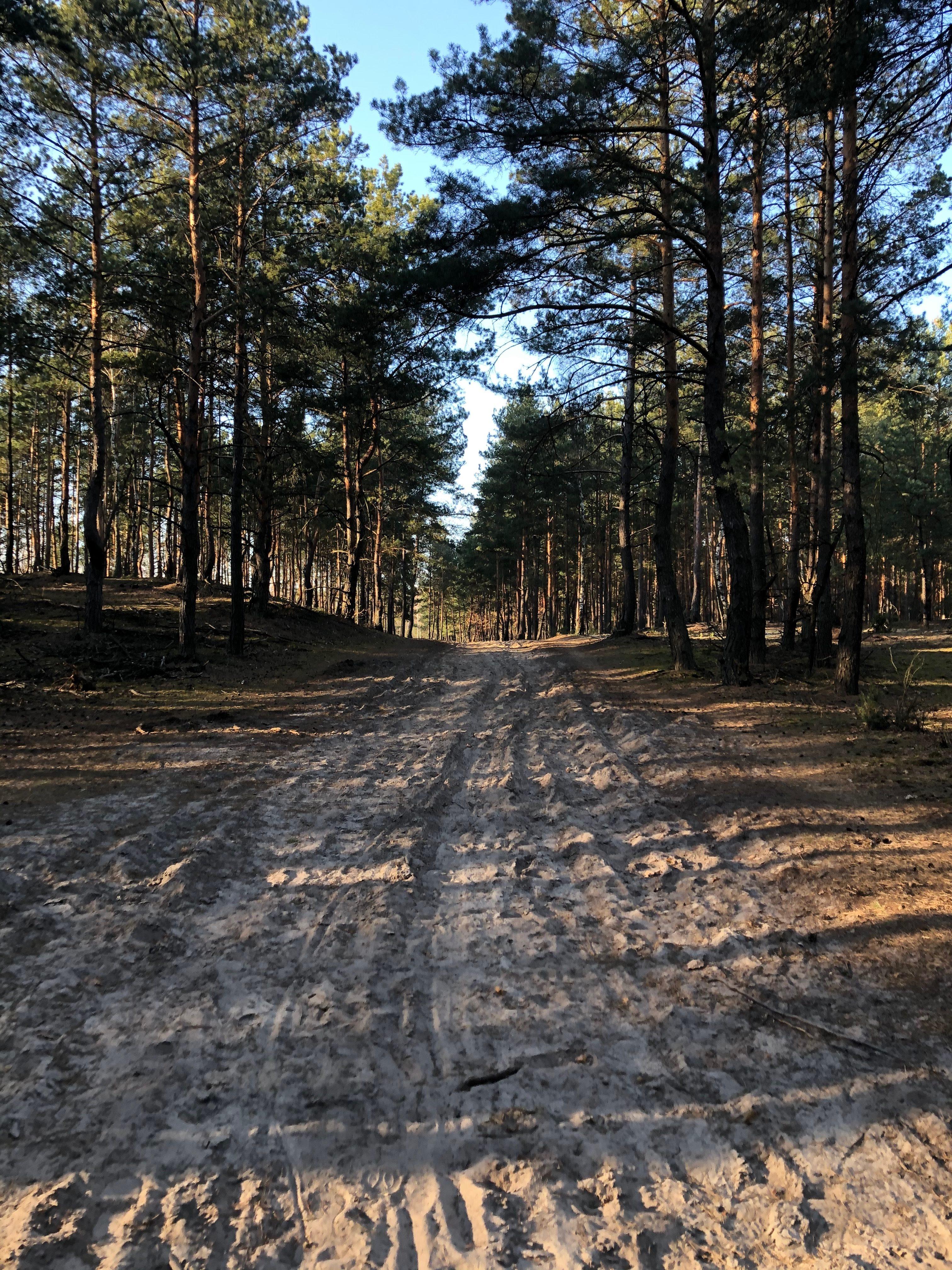 W 2020 miałam bardzo dużo planów podróżniczych i zawodowych. Miał być krąg we Wrocławiu i leśny krąg w Józefowie. Miałam jechać z Wami w góry z warsztatami osiędbania. Na ten moment pozostał tylko i AŻ las. Kocham lasy iglaste. Nic nie równa się temu zapachowi, piachowi pod stopami. Zawsze kiedy jestem w takim lesie, czuję jakby za chwile miała być wydma i Bałtyk. To niesamowite, jak mocno kształtuje nas miejsce, w którym dorastamy.