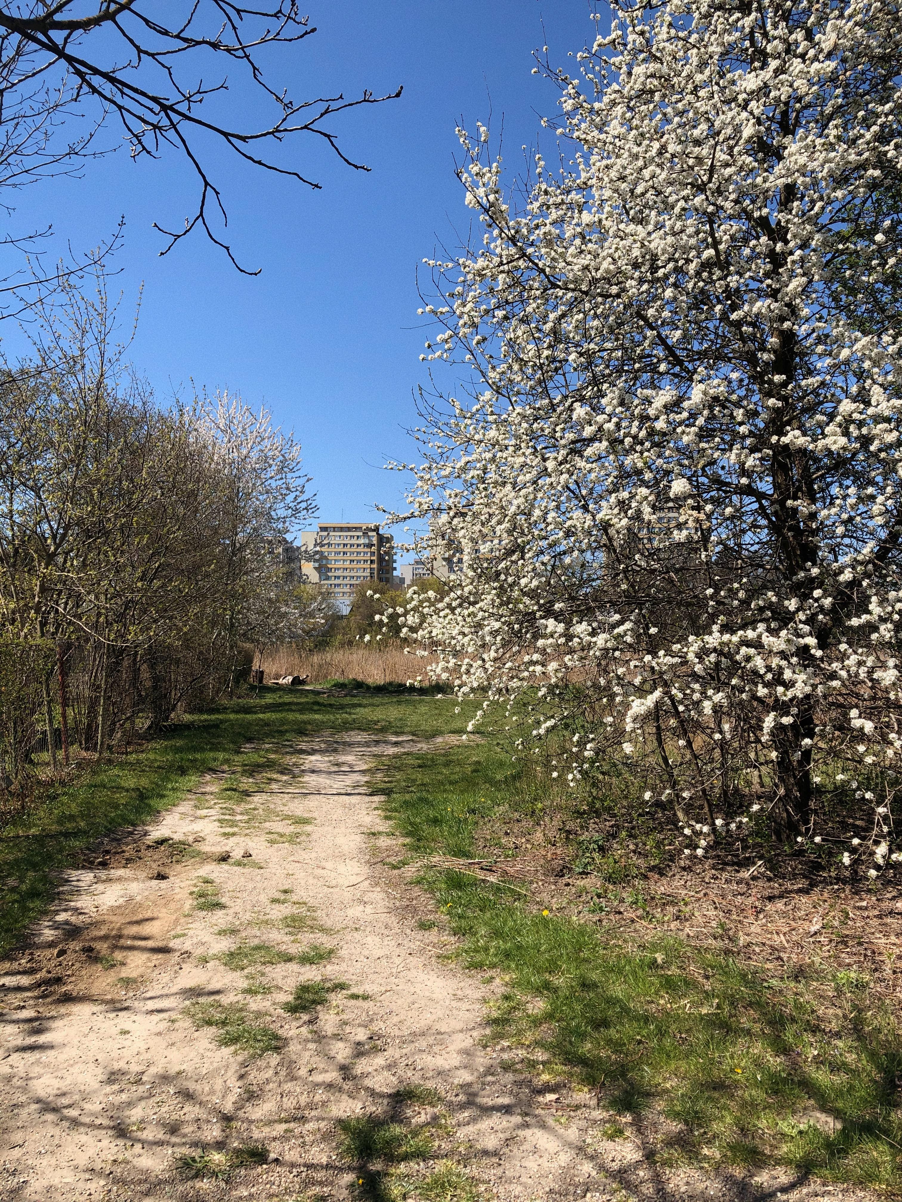 Wiosna zapiera dech w piersiach. W tym roku nie tylko z powodu epidemii nie było mi dane się nią rozkoszować...
