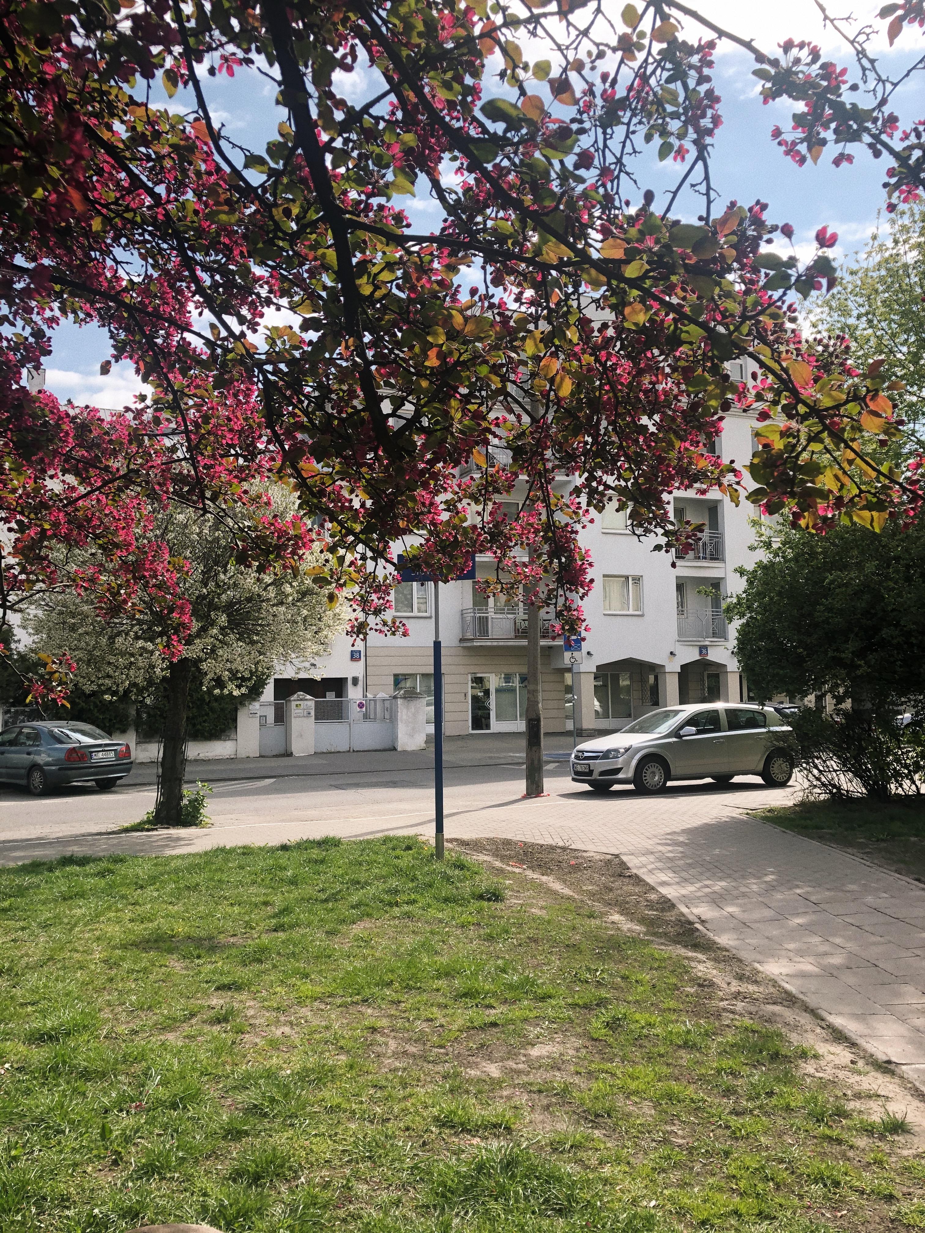 Mimo, że kwiecień był jak confetti z płatków kwitnących drzew, mam wrażenie, że wiosna w tym roku była sama sobie.