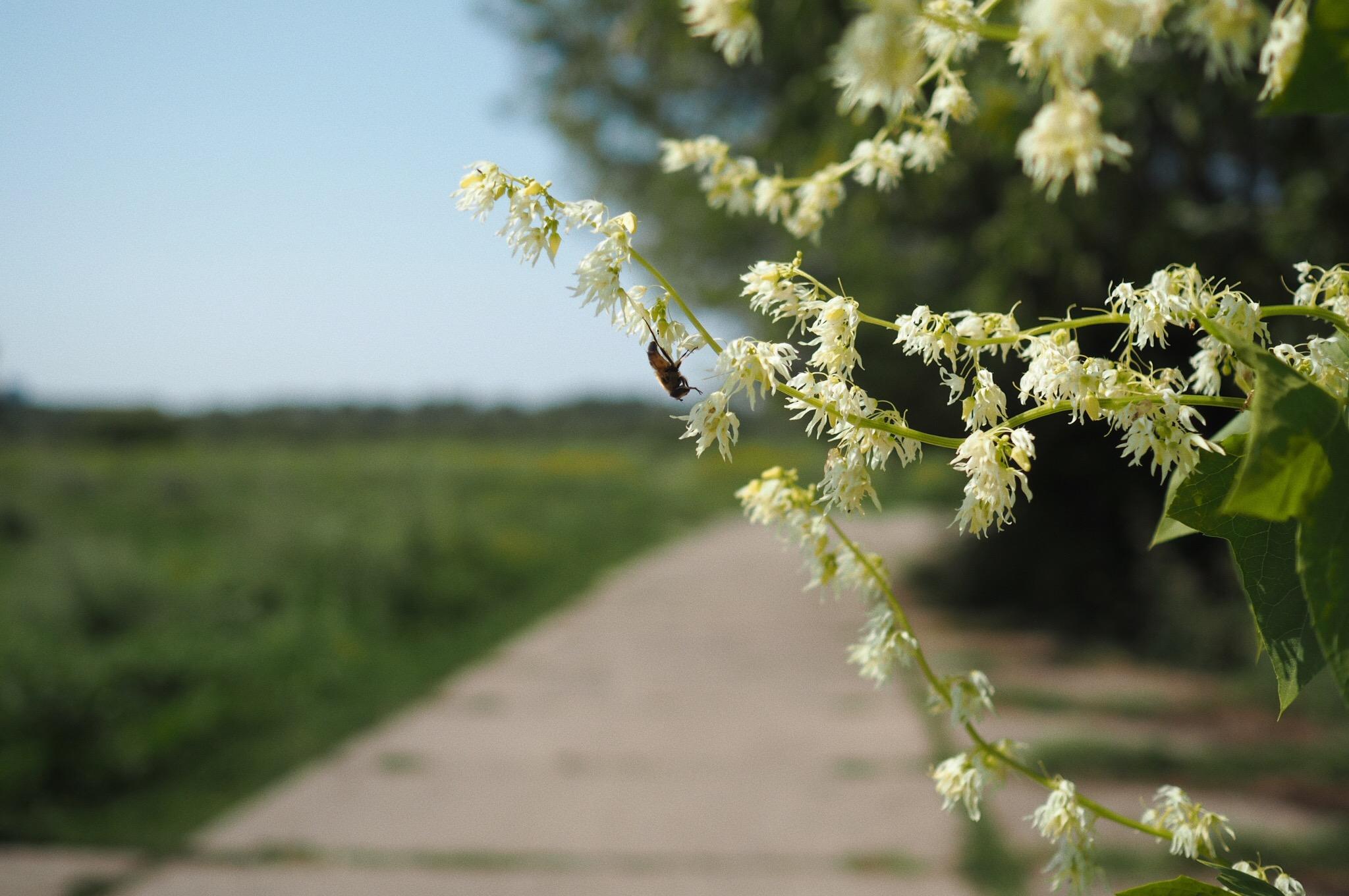 spacer botaniczny